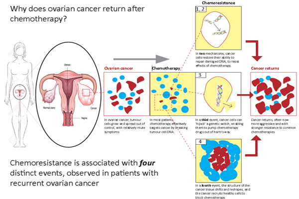 Why does ovarian cancer return after chemotherapy?
