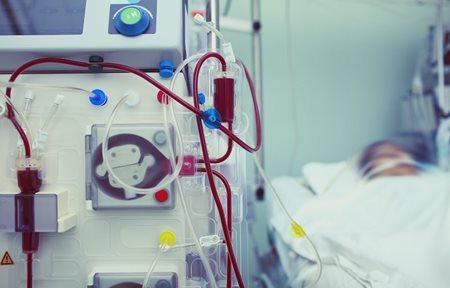 New hope in targeting kidney disease   The Westmead
