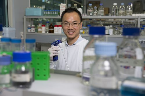Heart researcher Dr James Chong from The Westmead Institute